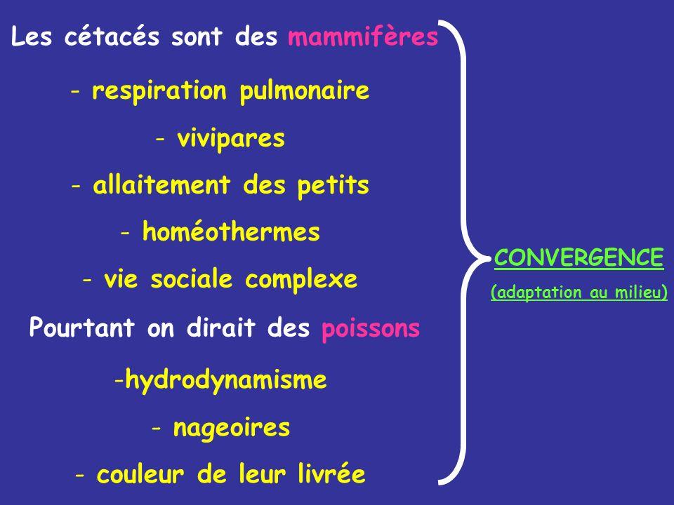 Les cétacés sont des mammifères Pourtant on dirait des poissons CONVERGENCE (adaptation au milieu) - respiration pulmonaire - vivipares - allaitement des petits - homéothermes - vie sociale complexe -hydrodynamisme - nageoires - couleur de leur livrée