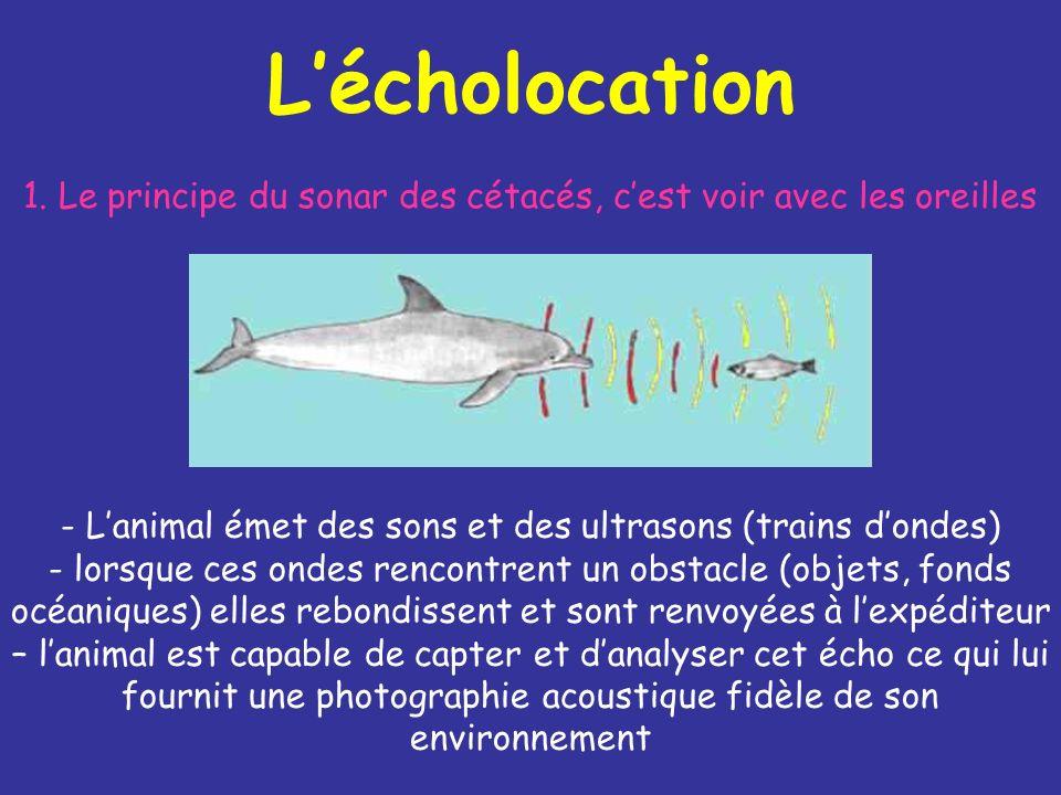 Lécholocation 1.