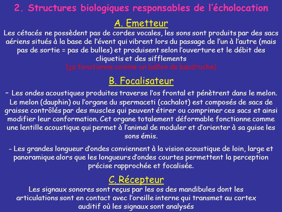 2.Structures biologiques responsables de lécholocation B.