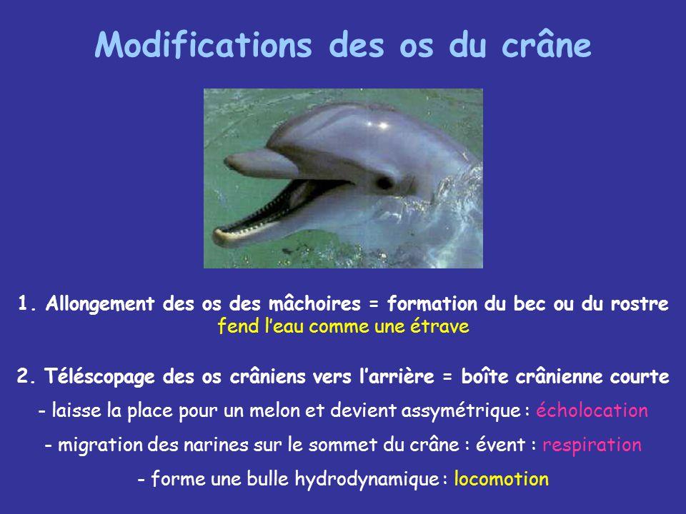 Le 6°sens magnétique 1.Les cétacés auraient une boussole interne Certaines zone du cerveau des dauphins et des baleines contiennent de petits cristaux doxyde de fer (magnétite) qui constitueraient une aiguille aimantée.