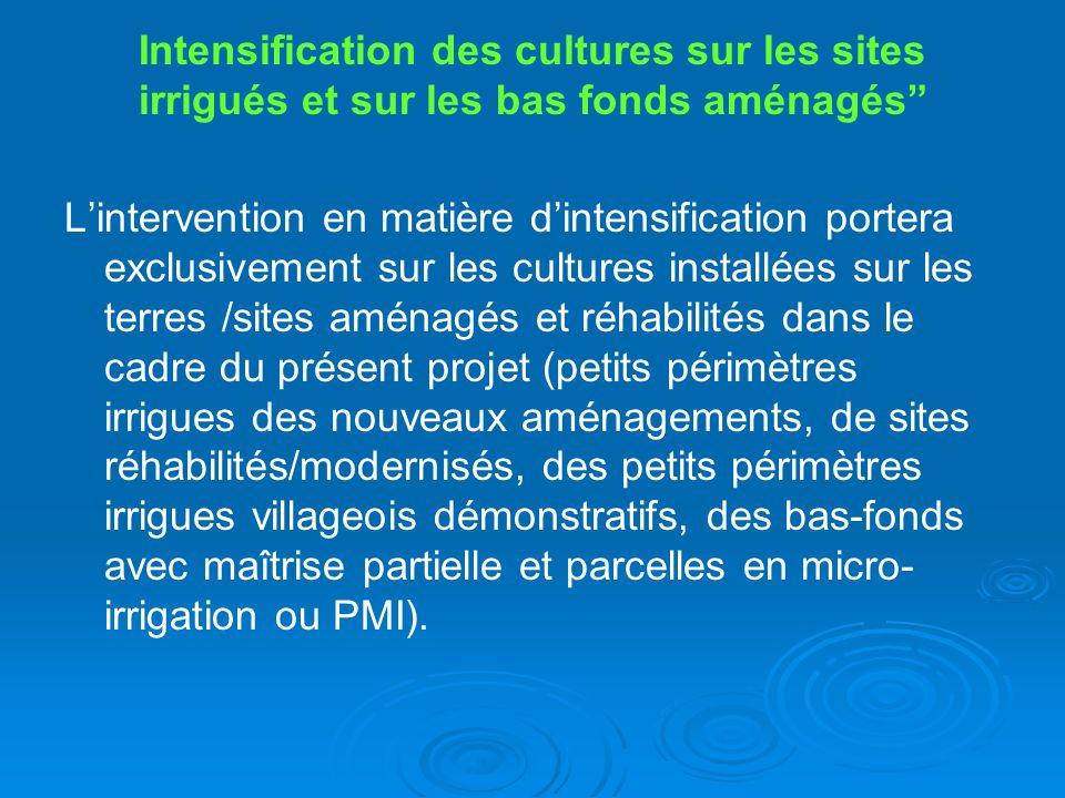 Intensification des cultures sur les sites irrigués et sur les bas fonds aménagés Lintervention en matière dintensification portera exclusivement sur