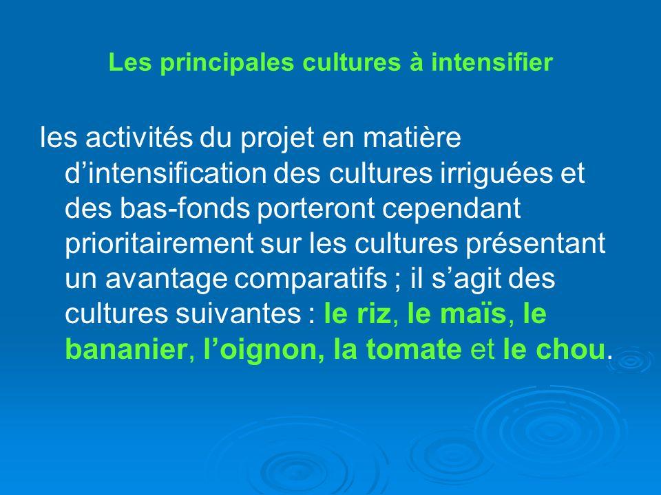 Les principales cultures à intensifier les activités du projet en matière dintensification des cultures irriguées et des bas-fonds porteront cependant