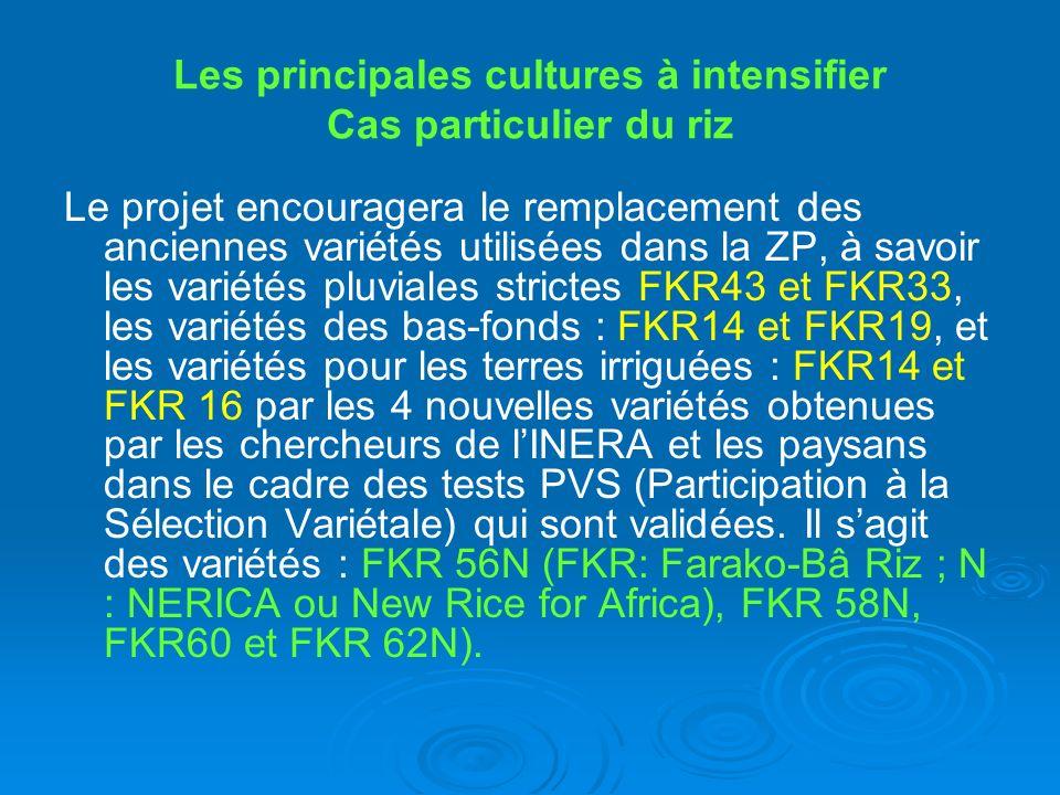 Les principales cultures à intensifier Cas particulier du riz Le projet encouragera le remplacement des anciennes variétés utilisées dans la ZP, à sav