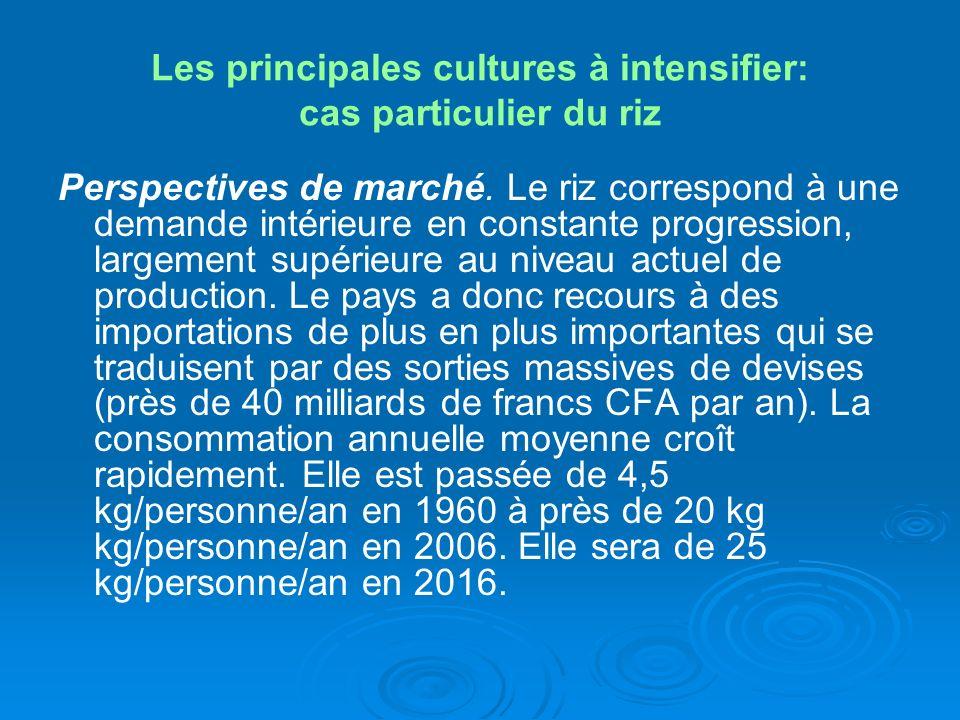 Les principales cultures à intensifier: cas particulier du riz Perspectives de marché. Le riz correspond à une demande intérieure en constante progres
