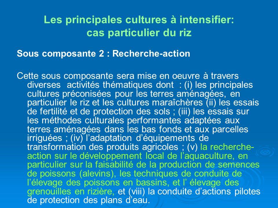 Les principales cultures à intensifier: cas particulier du riz Sous composante 2 : Recherche-action Cette sous composante sera mise en oeuvre à traver