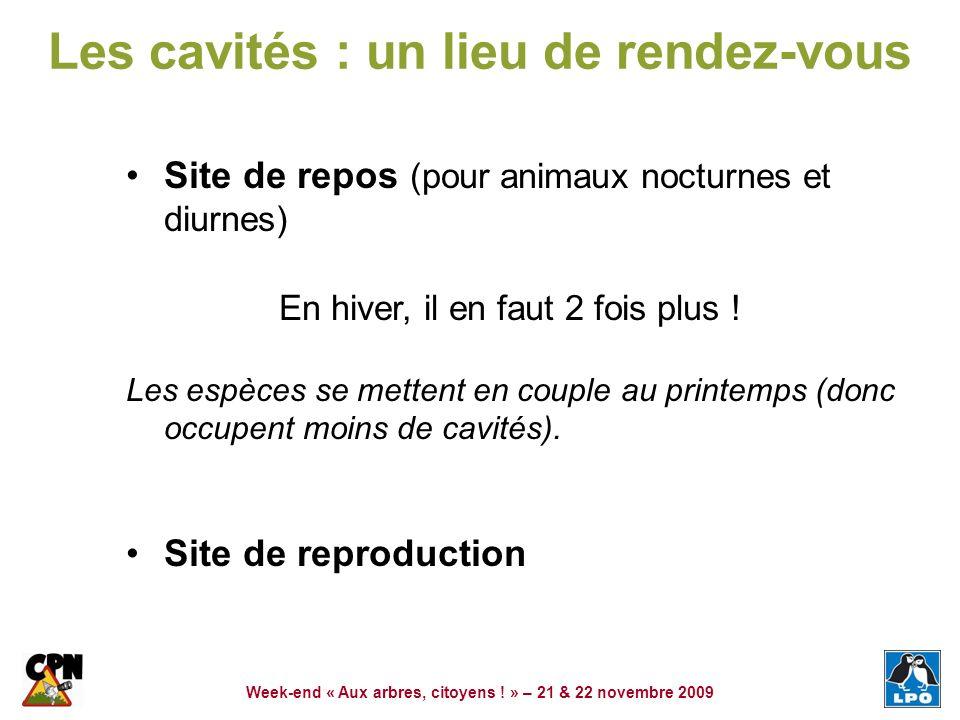 Week-end « Aux arbres, citoyens ! » – 21 & 22 novembre 2009 Les cavités : un lieu de rendez-vous Site de repos (pour animaux nocturnes et diurnes) En