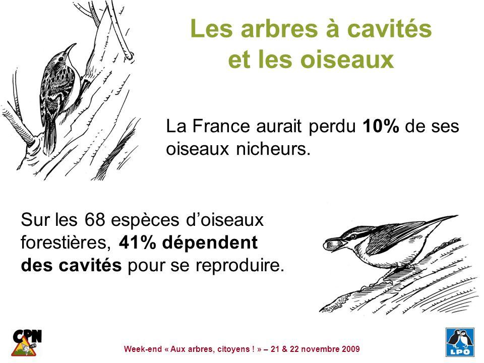 Week-end « Aux arbres, citoyens ! » – 21 & 22 novembre 2009 Les arbres à cavités et les oiseaux La France aurait perdu 10% de ses oiseaux nicheurs. Su