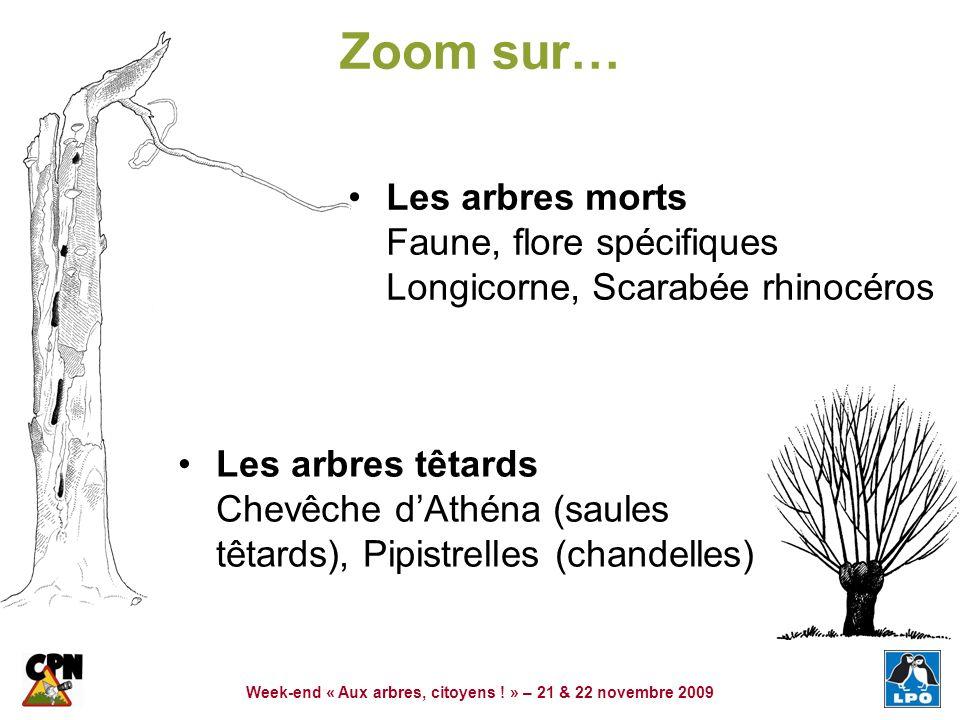 Week-end « Aux arbres, citoyens ! » – 21 & 22 novembre 2009 Zoom sur… Les arbres têtards Chevêche dAthéna (saules têtards), Pipistrelles (chandelles)