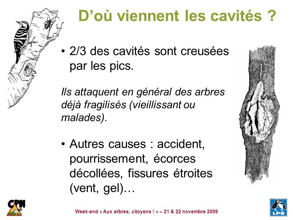 Week-end « Aux arbres, citoyens ! » – 21 & 22 novembre 2009 Doù viennent les cavités ? 2/3 des cavités sont creusées par les pics. Ils attaquent en gé