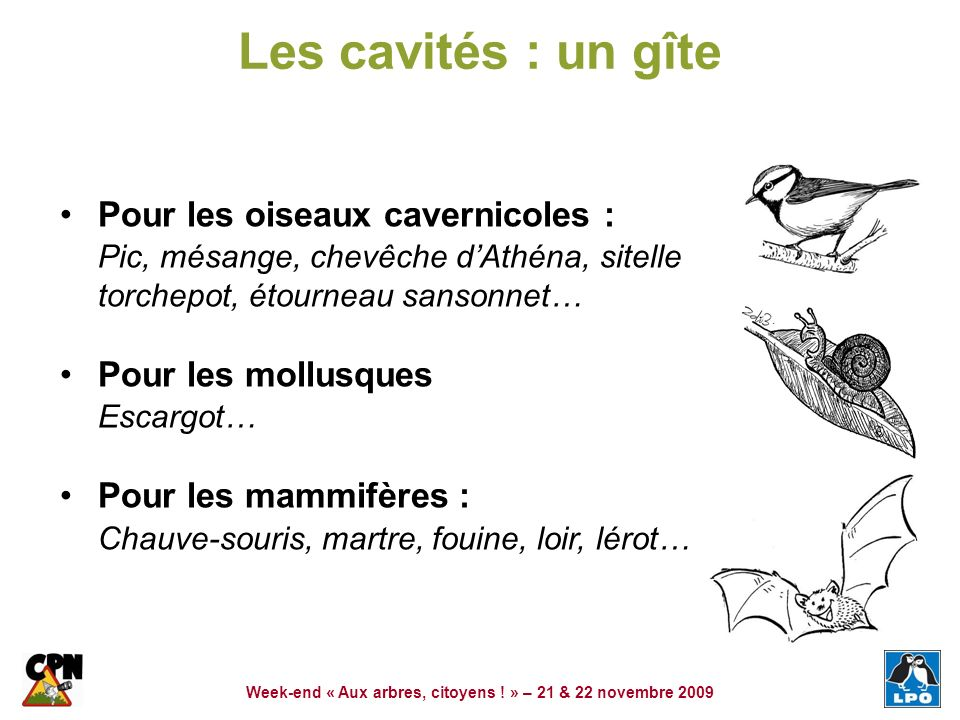 Week-end « Aux arbres, citoyens ! » – 21 & 22 novembre 2009 Les cavités : un gîte Pour les oiseaux cavernicoles : Pic, mésange, chevêche dAthéna, site