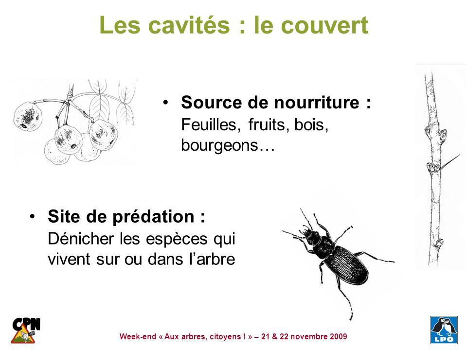 Week-end « Aux arbres, citoyens ! » – 21 & 22 novembre 2009 Les cavités : le couvert Site de prédation : Dénicher les espèces qui vivent sur ou dans l