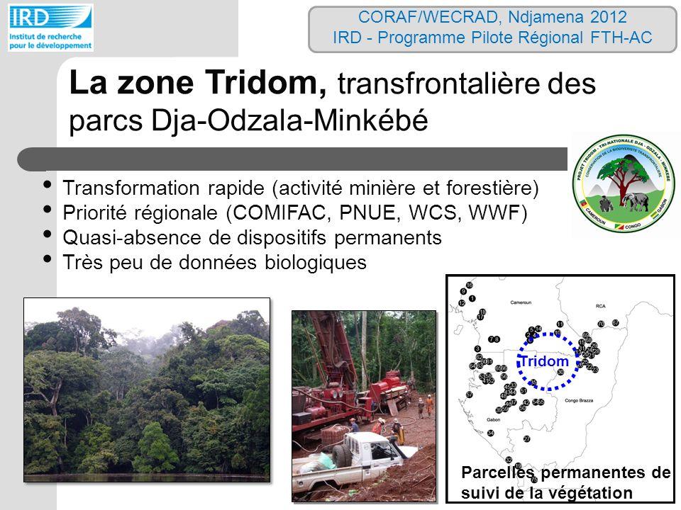 Parcelles permanentes de suivi de la végétation Tridom La zone Tridom, transfrontalière des parcs Dja-Odzala-Minkébé Transformation rapide (activité m
