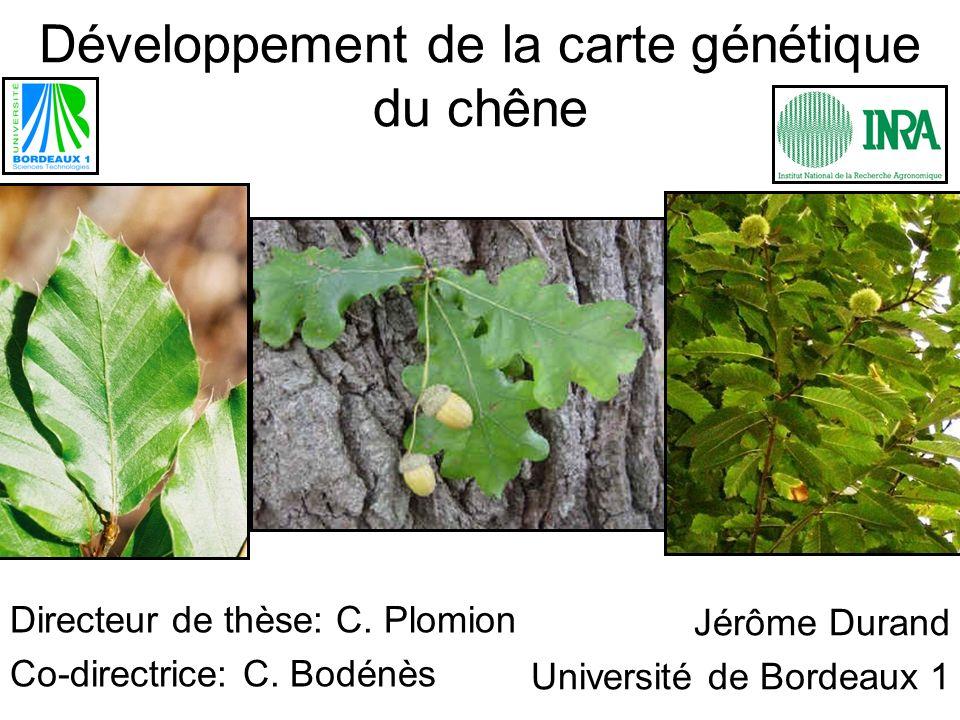 Développement de la carte génétique du chêne Directeur de thèse: C. Plomion Co-directrice: C. Bodénès Jérôme Durand Université de Bordeaux 1