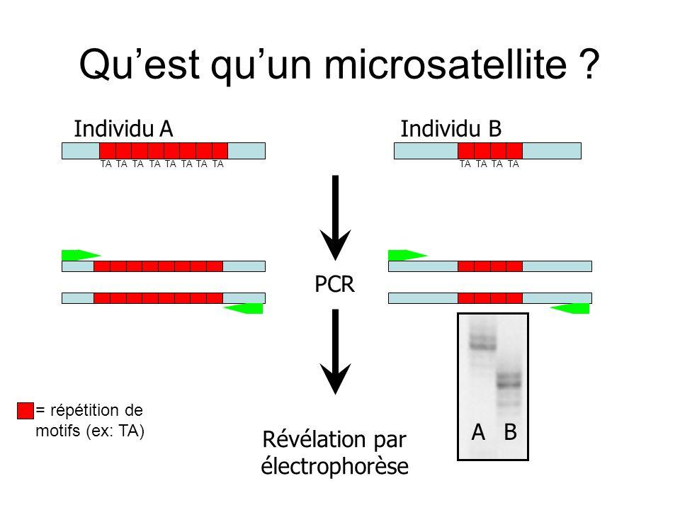Quest quun microsatellite ? Individu AIndividu B PCR Révélation par électrophorèse AB = répétition de motifs (ex: TA) TA
