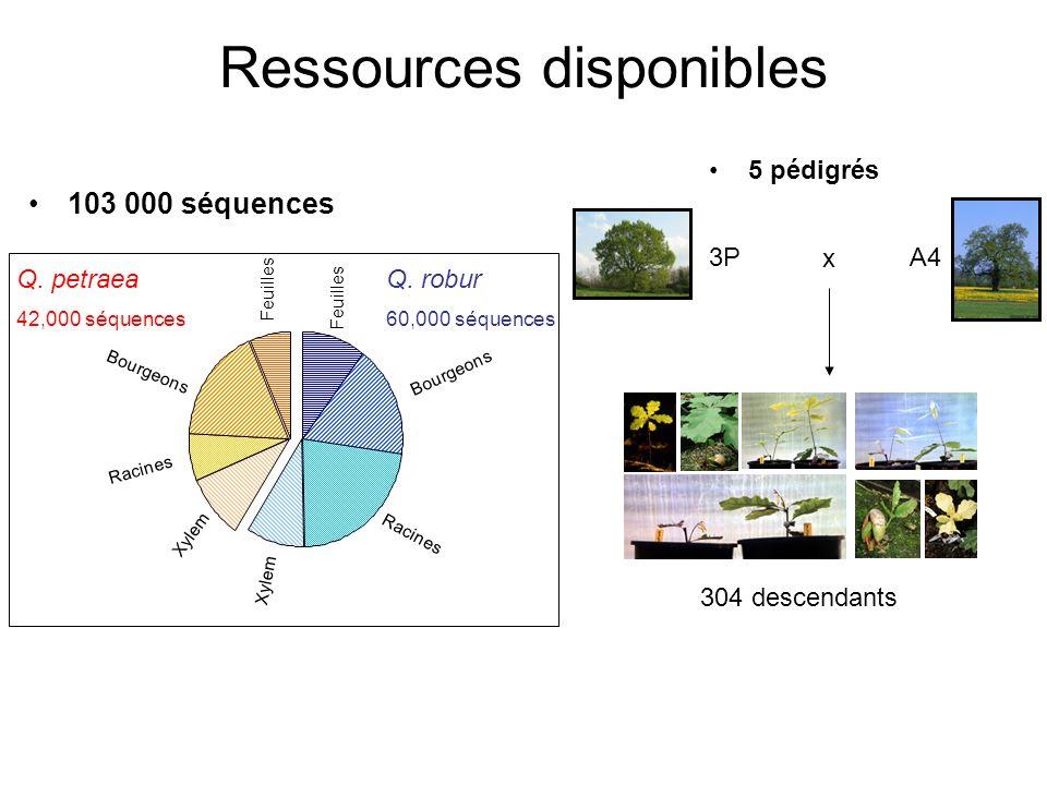 Ressources disponibles 103 000 séquences Q. petraea 42,000 séquences Q. robur 60,000 séquences Feuilles Bourgeons Racines Xylem 5 pédigrés 3PA4 x 304