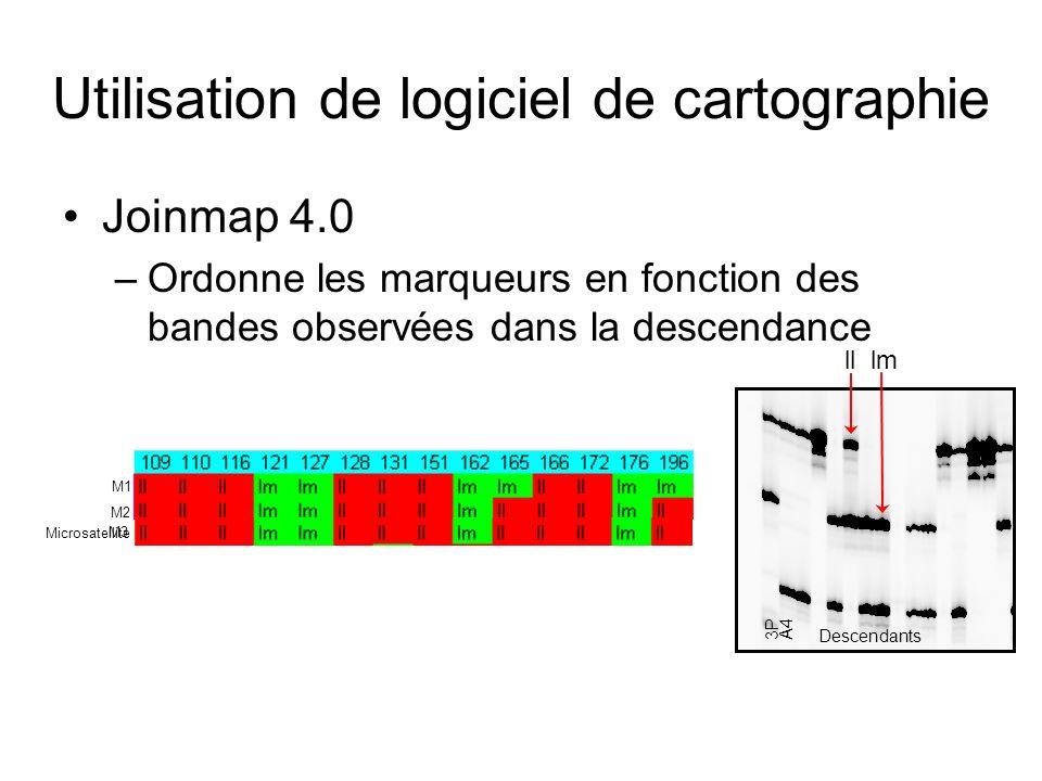 Utilisation de logiciel de cartographie Joinmap 4.0 –Ordonne les marqueurs en fonction des bandes observées dans la descendance 3PA4 Descendants lllm