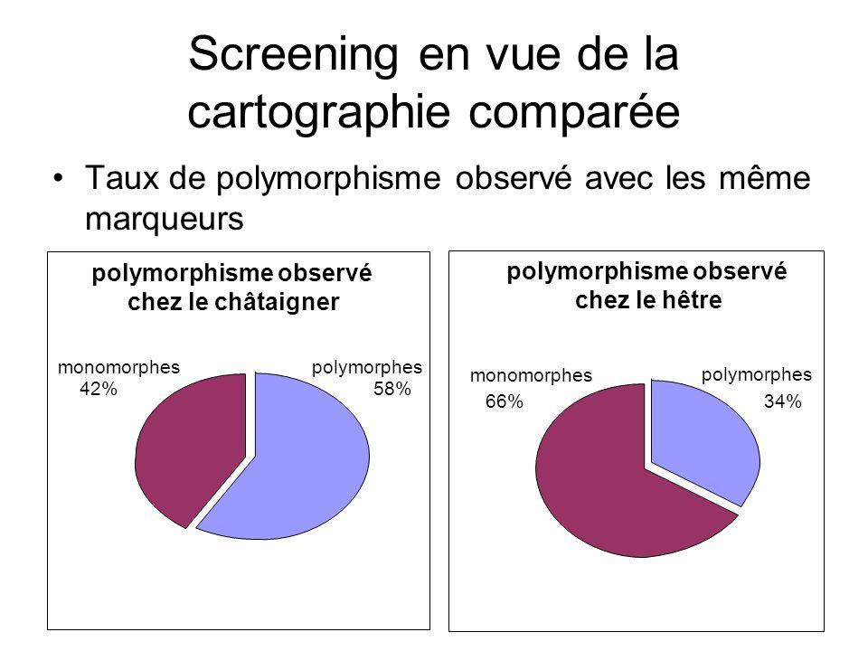 Screening en vue de la cartographie comparée Taux de polymorphisme observé avec les même marqueurs polymorphisme observé chez le châtaigner polymorphe