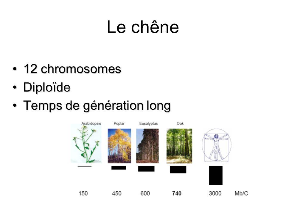 Le chêne 12 chromosomes12 chromosomes DiploïdeDiploïde Temps de génération longTemps de génération long