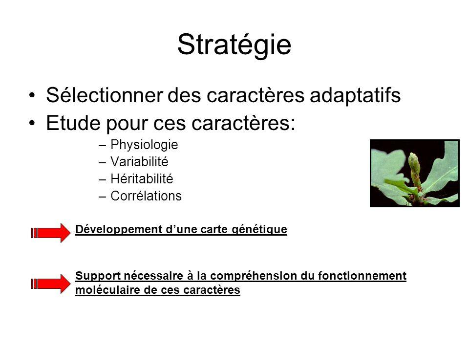 Stratégie Sélectionner des caractères adaptatifs Etude pour ces caractères: –Physiologie –Variabilité –Héritabilité –Corrélations Développement dune c