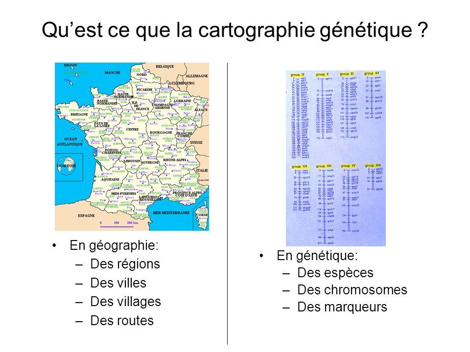 Quest ce que la cartographie génétique ? En géographie: –Des régions –Des villes –Des villages –Des routes En génétique: –Des espèces –Des chromosomes