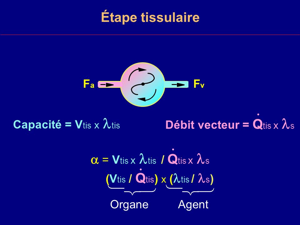 Étape tissulaire Capacité = V tis x tis.= V tis x tis / Q tis x s.