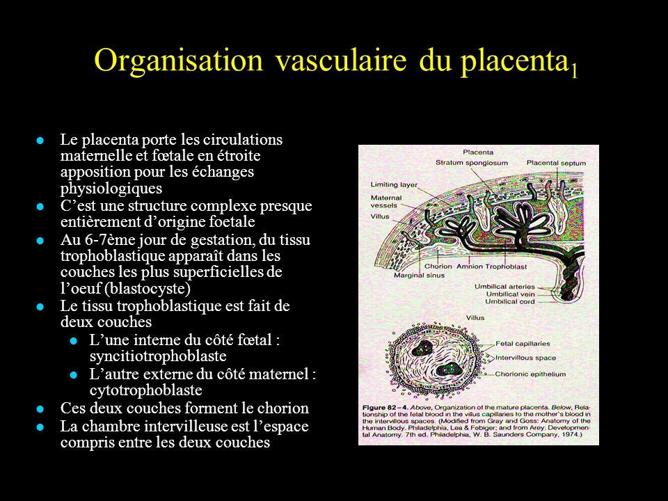 Organisation vasculaire du placenta 1 Le placenta porte les circulations maternelle et fœtale en étroite apposition pour les échanges physiologiques C