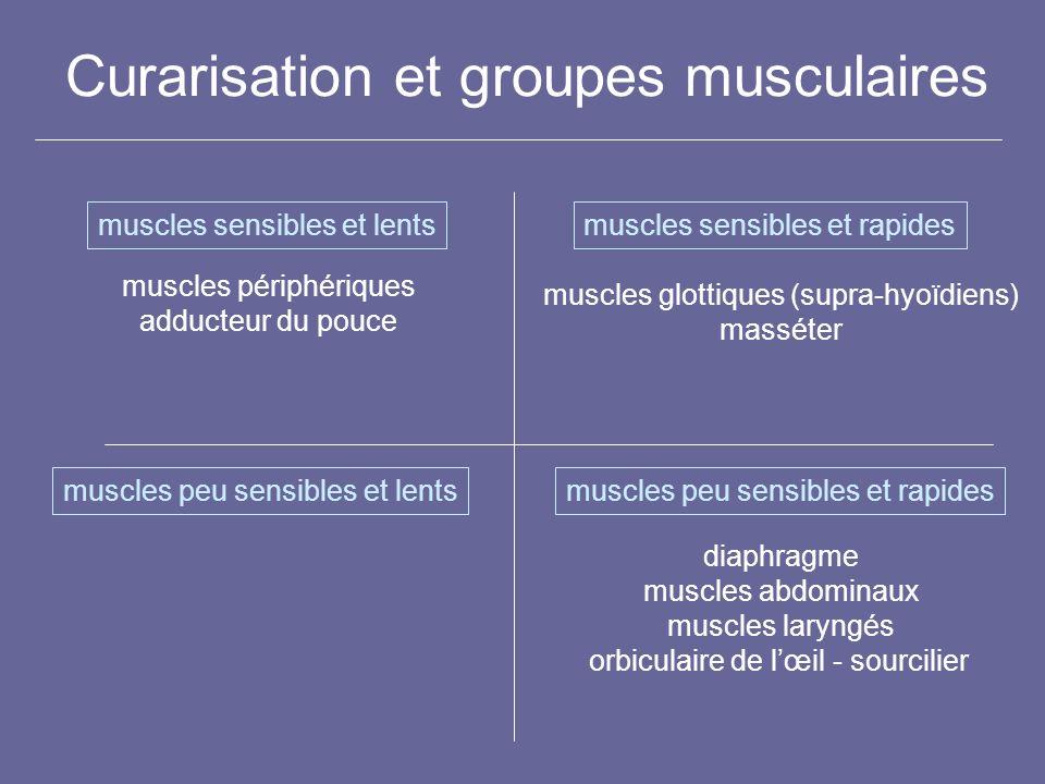 Curarisation et groupes musculaires muscles sensibles et lentsmuscles sensibles et rapides muscles peu sensibles et lentsmuscles peu sensibles et rapi