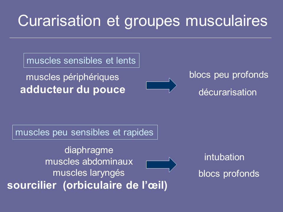 Curarisation et groupes musculaires muscles sensibles et lents muscles peu sensibles et rapides muscles périphériques adducteur du pouce diaphragme mu
