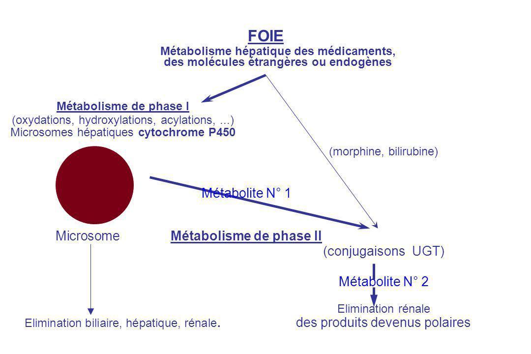 FOIE Métabolisme hépatique des médicaments, des molécules étrangères ou endogènes Métabolisme de phase I (oxydations, hydroxylations, acylations,...) Microsomes hépatiques cytochrome P450 (morphine, bilirubine) Métabolite N° 1 MicrosomeMétabolisme de phase II (conjugaisons UGT) Métabolite N° 2 Elimination rénale Elimination biliaire, hépatique, rénale.