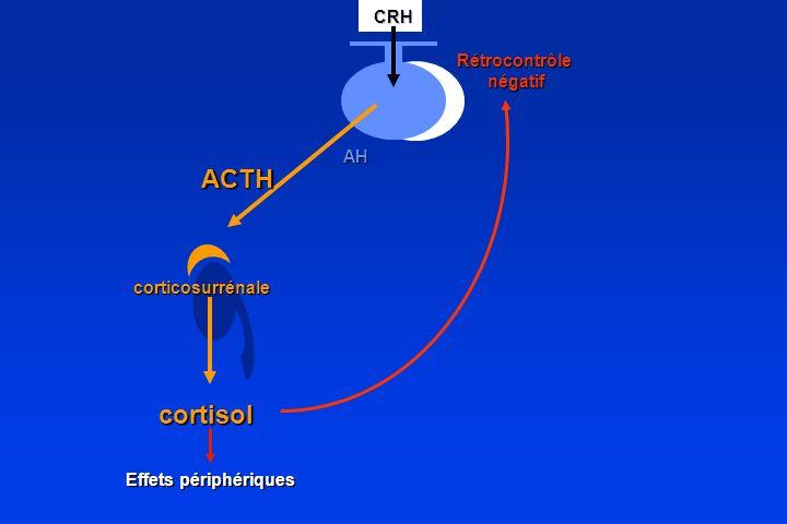 ACTH corticosurrénale cortisol CRH CRHAH Rétrocontrôle négatif négatif Effets périphériques