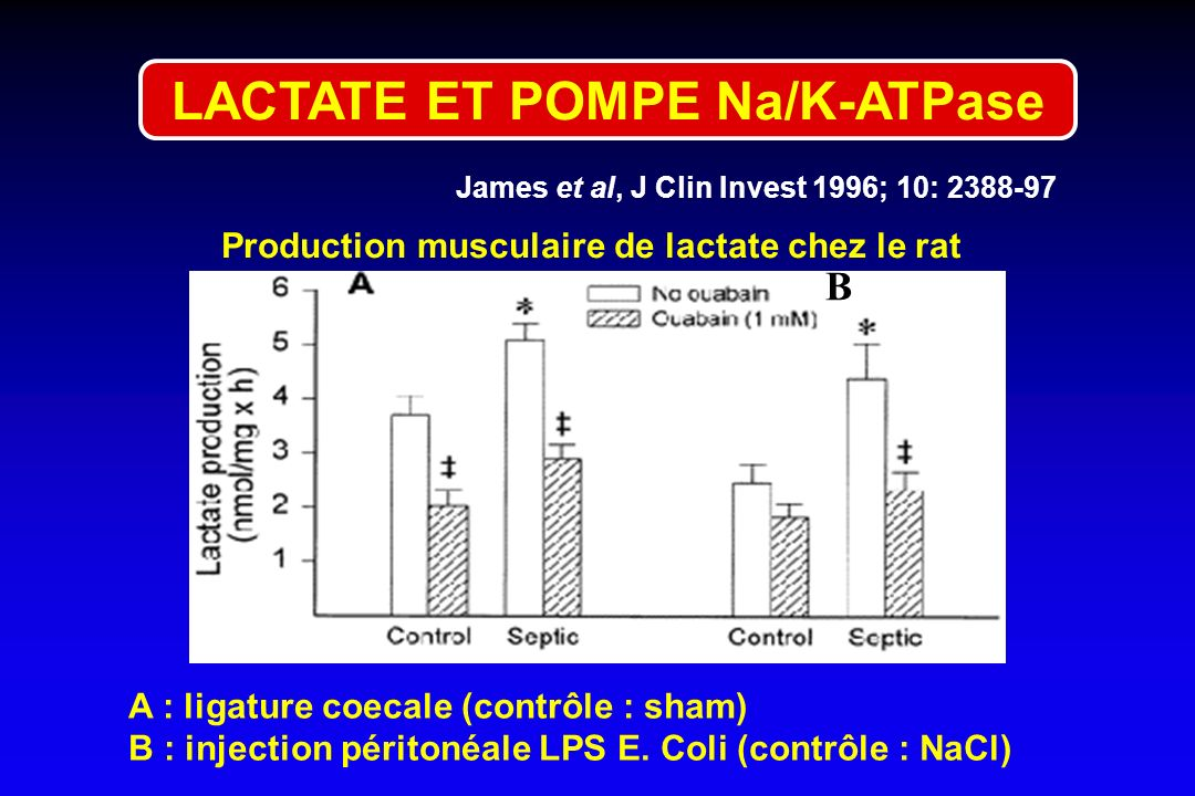 James et al, J Clin Invest 1996; 10: 2388-97 B A : ligature coecale (contrôle : sham) B : injection péritonéale LPS E. Coli (contrôle : NaCl) Producti