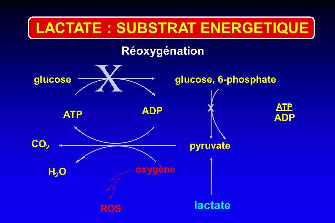 glucoseglucose, 6-phosphate ATP ADP pyruvate CO 2 oxygène lactate ATP ADP H2OH2O X X ROS LACTATE : SUBSTRAT ENERGETIQUE Réoxygénation