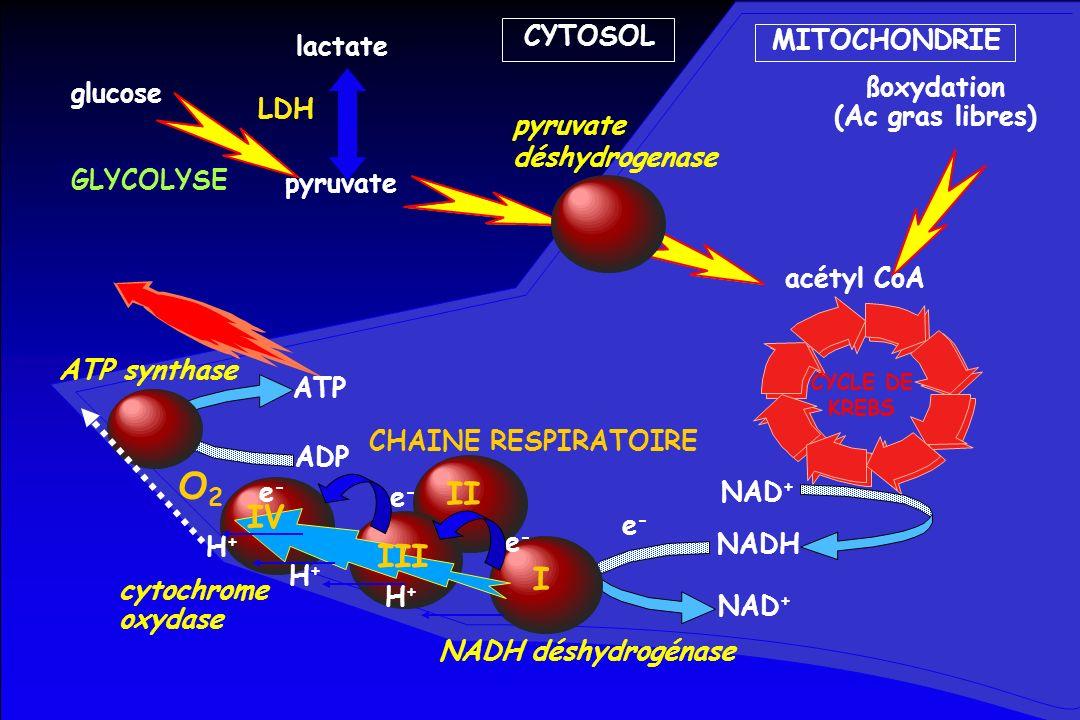 CYTOSOL MITOCHONDRIE glucose GLYCOLYSE pyruvate CYCLE DE KREBS NAD + NADH lactate ßoxydation (Ac gras libres) acétyl CoA pyruvate déshydrogenase ADP A