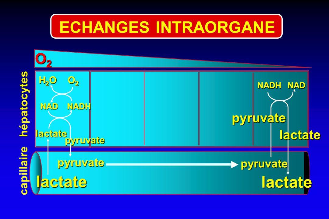 O2O2O2O2 pyruvate NADH NAD NAD NADH lactate H 2 O O 2 pyruvate pyruvate hépatocytes capillaire pyruvate lactate lactate lactate ECHANGES INTRAORGANE