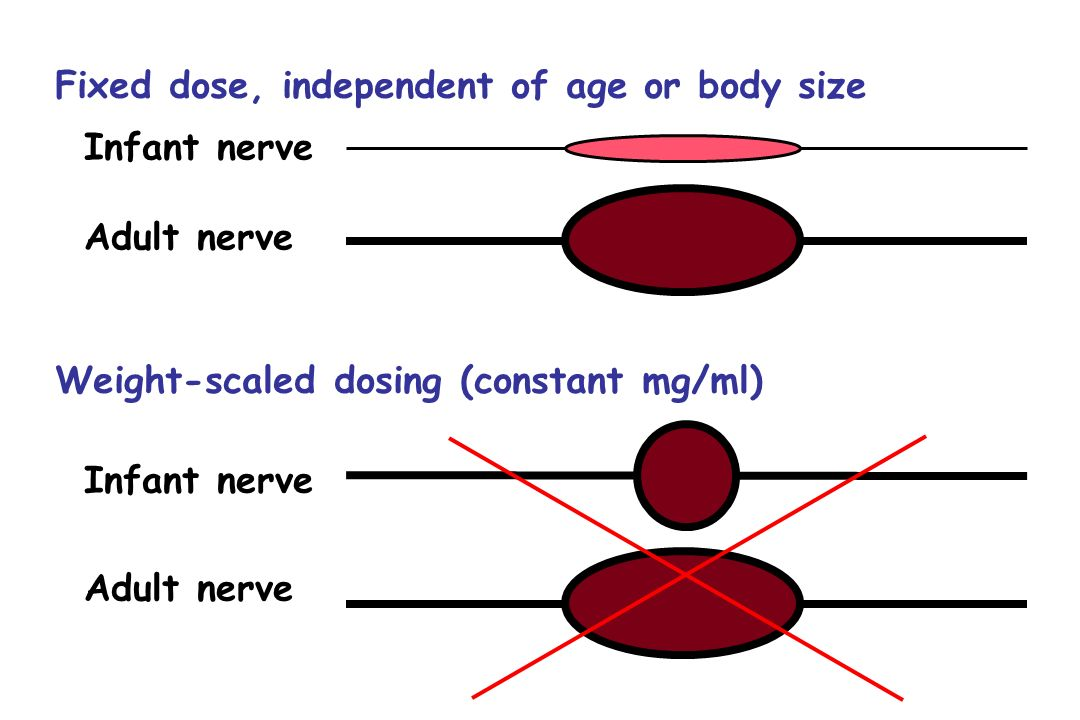 Fixed dose, independent of age or body size Infant nerve Adult nerve Weight-scaled dosing (constant mg/ml) Infant nerve Adult nerve