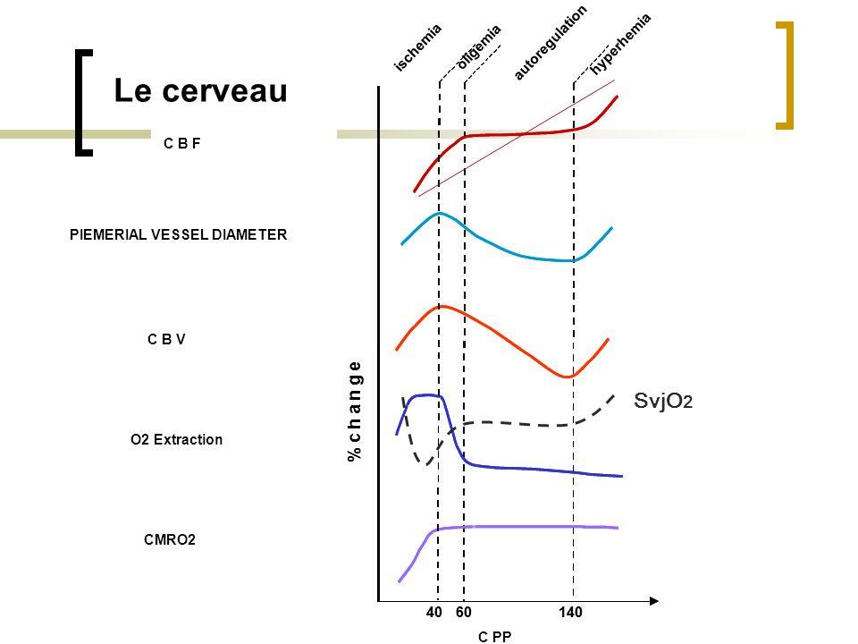 Débit sanguin cérébral Volume sanguin cérébral Taux dextraction doxygène Consommation doxygène Diamètre des artères piemériennes 6014040 hyperhemia %