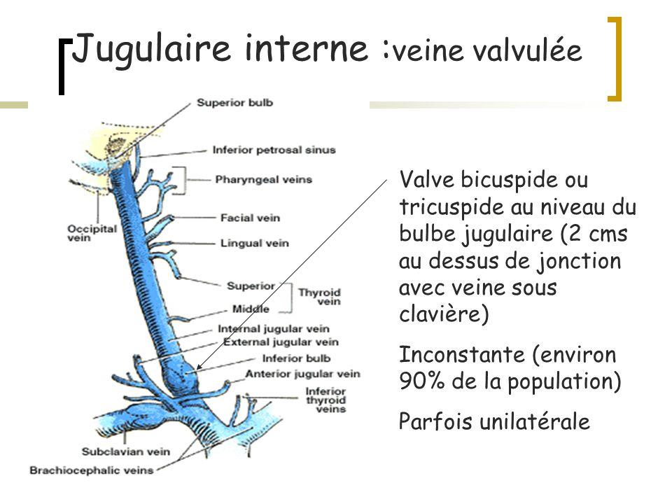 Jugulaire interne : veine valvulée Valve bicuspide ou tricuspide au niveau du bulbe jugulaire (2 cms au dessus de jonction avec veine sous clavière) I
