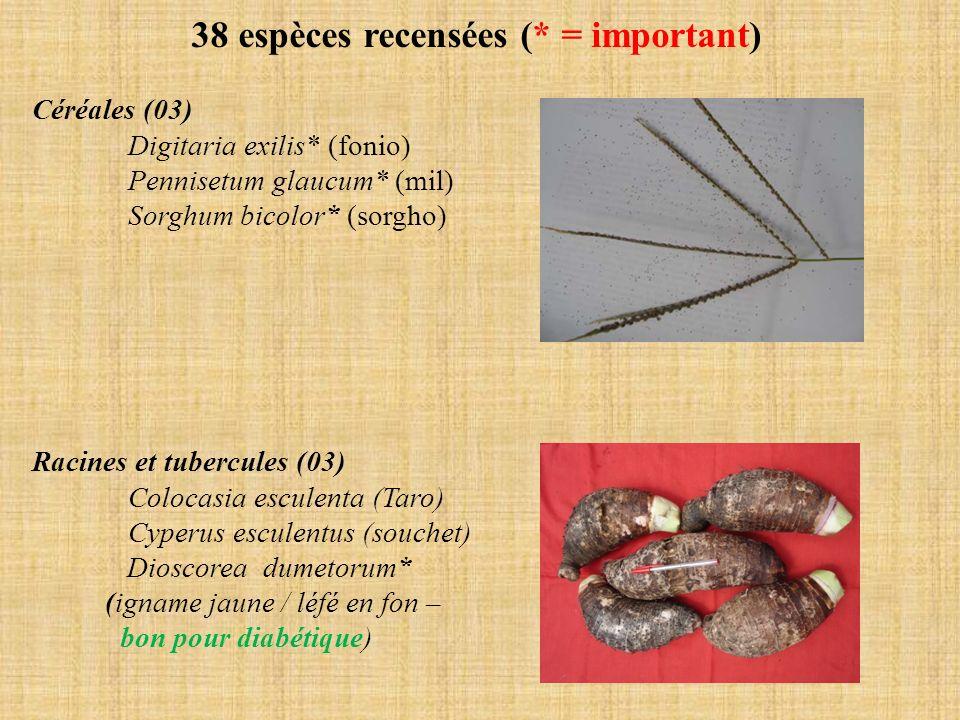 38 espèces recensées (* = important) Céréales (03) Digitaria exilis* (fonio) Pennisetum glaucum* (mil) Sorghum bicolor* (sorgho) Racines et tubercules