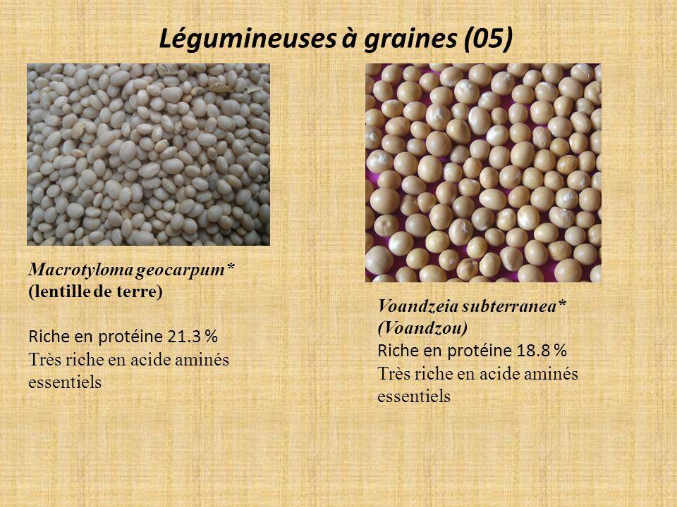 Légumineuses à graines (05) Macrotyloma geocarpum* (lentille de terre) Riche en protéine 21.3 % Très riche en acide aminés essentiels Voandzeia subter