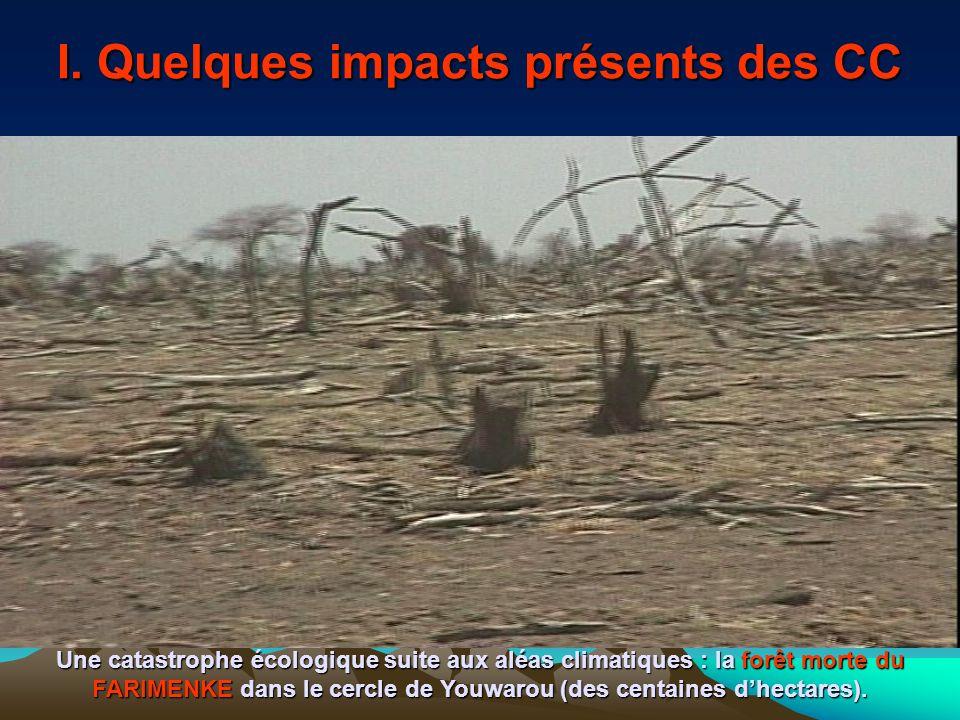 I. Quelques impacts présents des CC Une catastrophe écologique suite aux aléas climatiques : la forêt morte du FARIMENKE dans le cercle de Youwarou (d