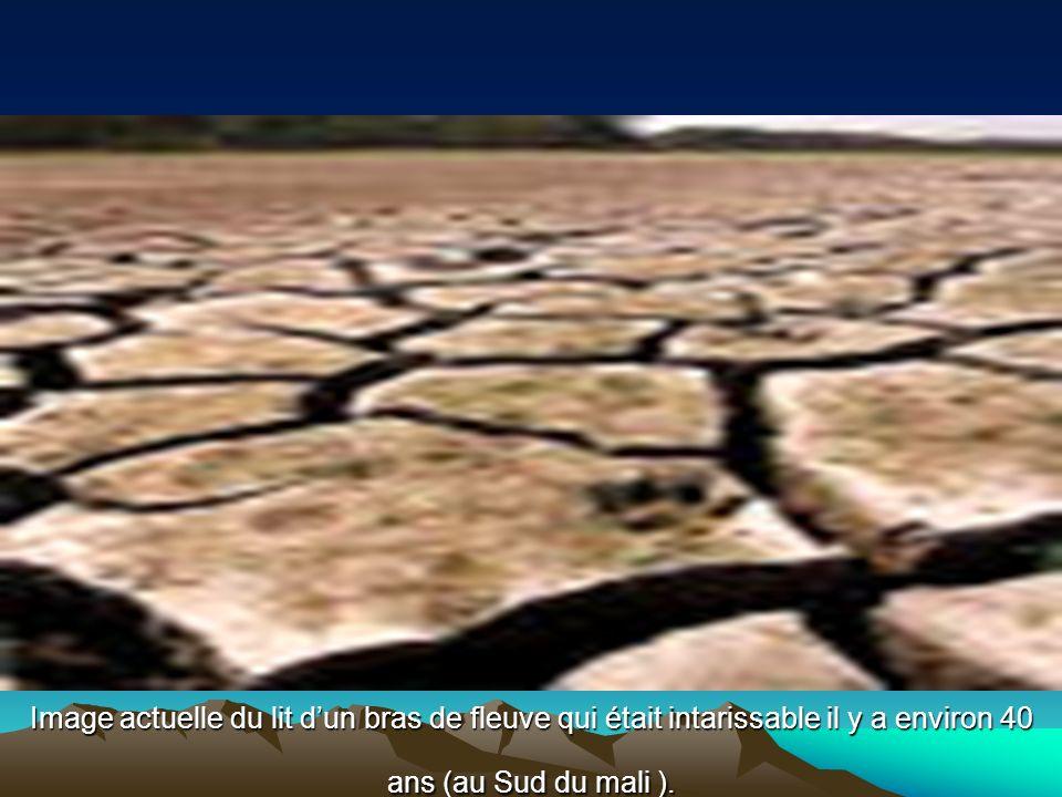 Image actuelle du lit dun bras de fleuve qui était intarissable il y a environ 40 ans (au Sud du mali ).