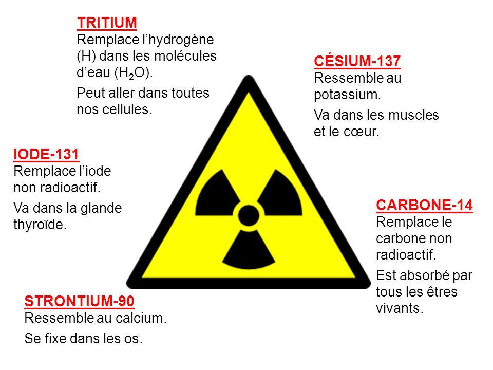 TRITIUM Remplace lhydrogène (H) dans les molécules deau (H 2 O). Peut aller dans toutes nos cellules. IODE-131 Remplace liode non radioactif. Va dans