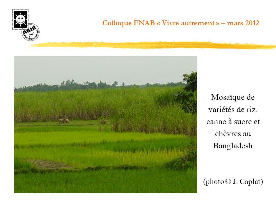 Mosaïque de variétés de riz, canne à sucre et chèvres au Bangladesh (photo © J. Caplat) Colloque FNAB « Vivre autrement » – mars 2012