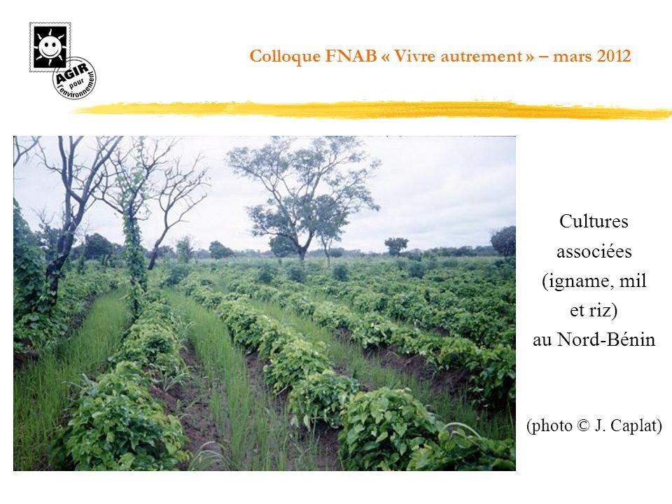 Cultures associées (igname, mil et riz) au Nord-Bénin (photo © J. Caplat) Colloque FNAB « Vivre autrement » – mars 2012
