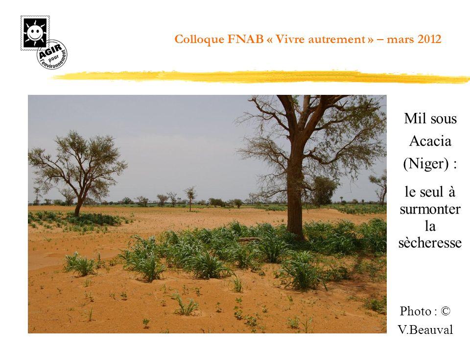 Photo : © V.Beauval Mil sous Acacia (Niger) : le seul à surmonter la sècheresse Colloque FNAB « Vivre autrement » – mars 2012