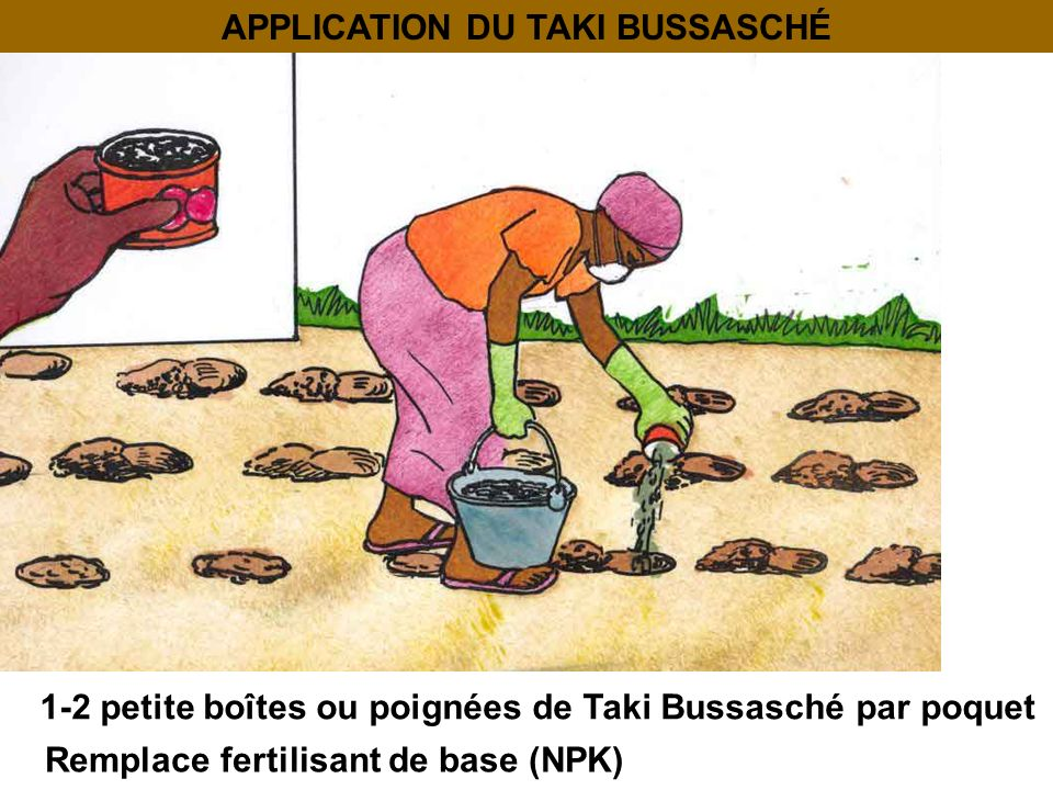 APPLICATION DU TAKI BUSSASCHÉ 1-2 petite boîtes ou poignées de Taki Bussasché par poquet Remplace fertilisant de base (NPK)