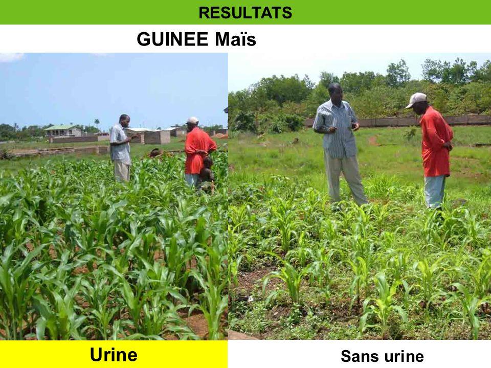 GUINEE Maïs Urine Sans urine