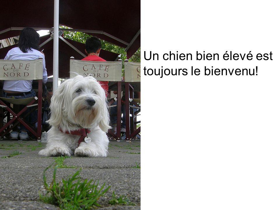 Un chien bien élevé est toujours le bienvenu!