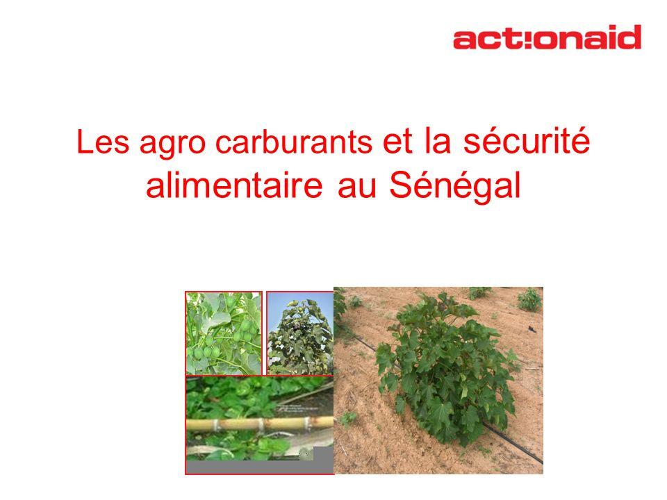 Les agro carburants et la sécurité alimentaire au Sénégal