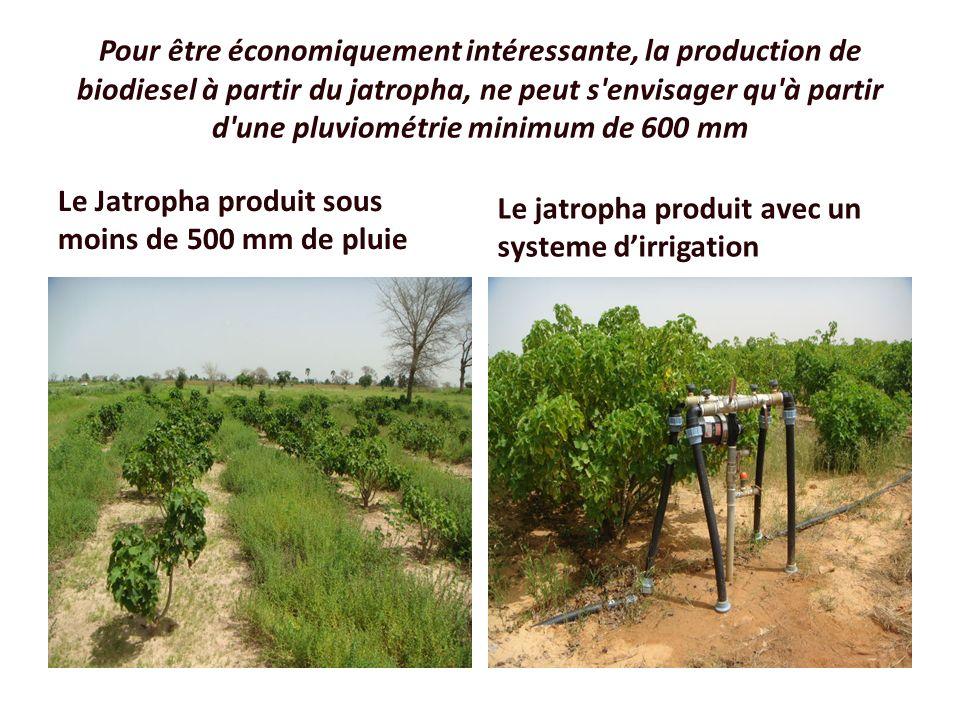Pour être économiquement intéressante, la production de biodiesel à partir du jatropha, ne peut s'envisager qu'à partir d'une pluviométrie minimum de